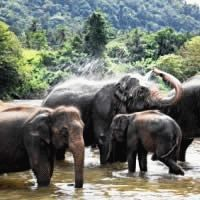 Thailand - For the Adventurous : 3 Star ex Johannesburg : Let's Explore!