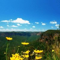Sydney - Blue Mountains, Australian Wildlife & River Cruise