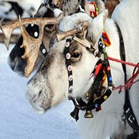 On The Go : Lapland Long Weekend - 5 Days