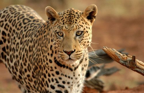 Kruger National Park - Hamiltons Tented Camp : 5 Star Self-Drive