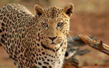 Waterberg - Entabeni Wildside Safari Camp