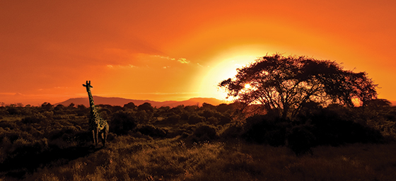 Africa into the wild