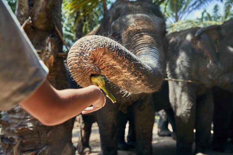 elephant-sanctuary-work