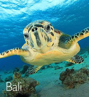 Cheap Bali Holidays