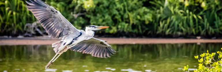 A water bird takes flight in the Maldives, which can be visited with a holiday package from Flight Centre.