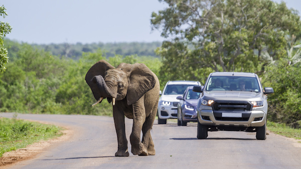kruger-park-holiday