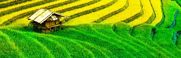 Kintamani Barong and Tegalalang Rice Fields Tour