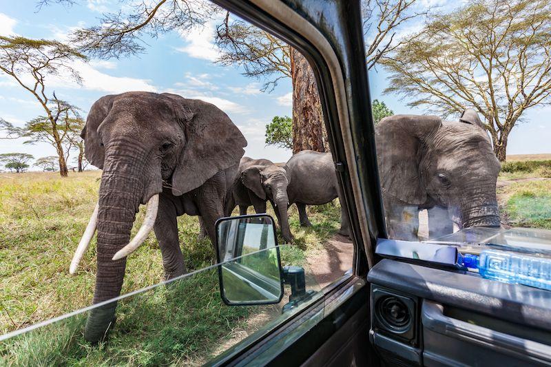 south-africa-travel-bush