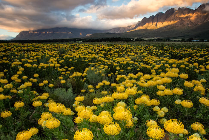 darling-western-cape