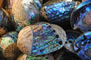Paua shells, Kaikoura | by Flight Centre's Katrina Imbruglia