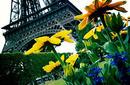 The Eiffel Tower   by Flight Centre's Richard Dannhauser