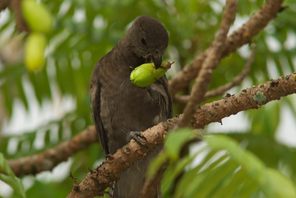 321_IMG26 Black Parrot_3872x2592